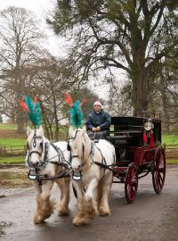 Horse and cart at Hartlebury Castle