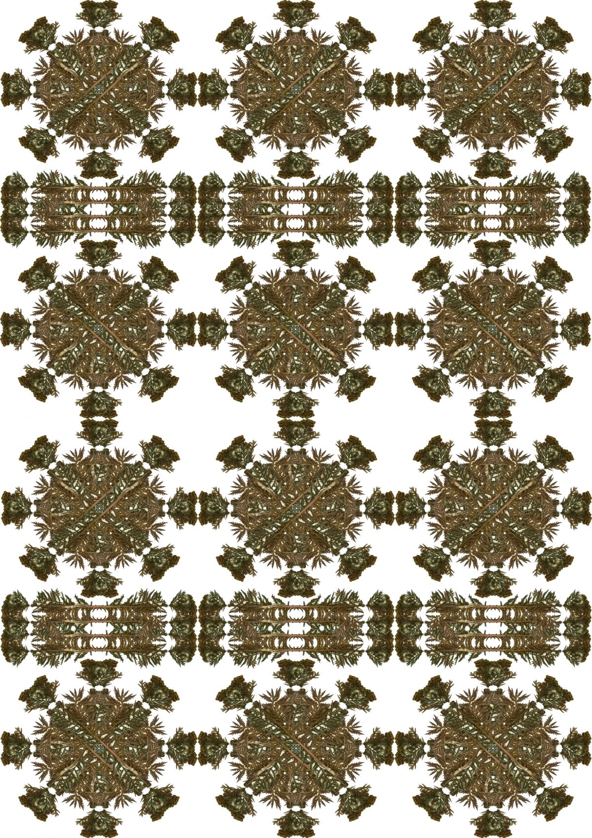 Kaleidescopic artwork manipulating images of a Tansy botanical specimen